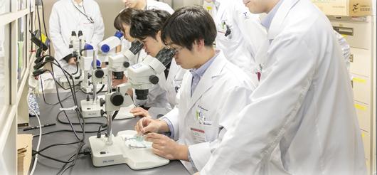 実体顕微鏡を使った組織解剖実習の様子