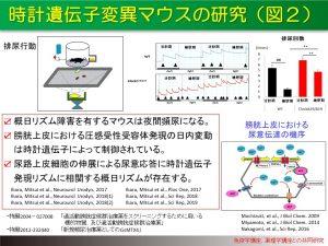 時計遺伝子変異マウスの研究