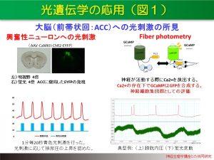 光遺伝学の応用